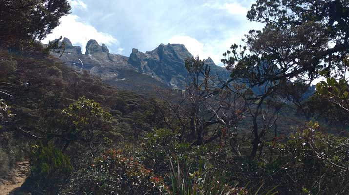 Typical Mountain Blackeye breeding habitat at Laban Rata field station with Mt. Kinabalu in the background.<br />(Credit: T. R. Forrester)